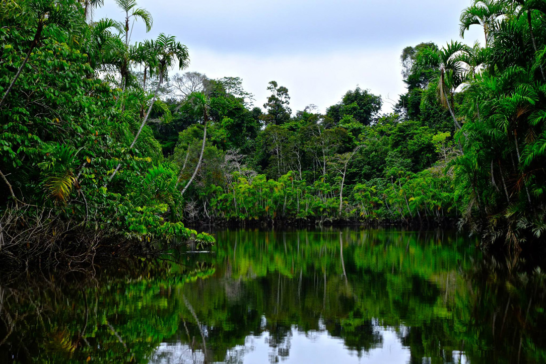 Panacocha Reserve
